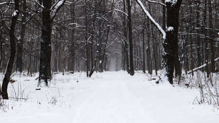 Winter landscape. Snow-covered trail in the city park. Snow covered trees in a winter forest with a road.