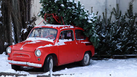 Red small retro car Zaporozhets with a Christmas tree fir tied to the roof. Fresh cut natural spruce for Christmas holiday decoration, family celebration symbol. Ukraine, Kiev - January 16, 2021. Editorial