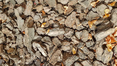 Wood Sawdust For The Garden. Texture of a tree bark lying on the ground. Background from a tree bark. Decorative bark, mulch, mulching. Decorative wood chips. Natural pine mulch brown