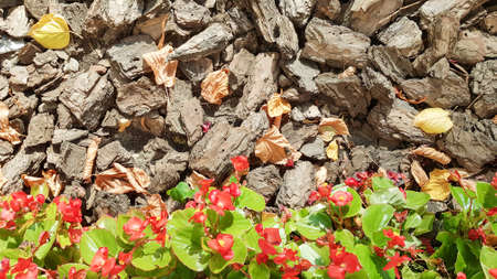 Sawdust for the garden. Texture of tree bark lying on the ground. Background from a tree bark with small red flowers and yellow leaves in autumn. Stockfoto