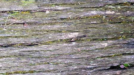 old wood texture and Lichen. tree bark with moss, abstract background, texture. detail of moss and lichen on wooden fence Stockfoto