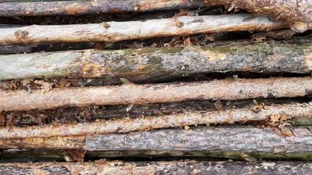 Firewood on big pile, top view, beautiful wooden logs. background of stacked logs top view from the drone. pile stacked natural sawn wooden logs background.