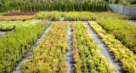 Potted plants are sold at the garden center. Selling plants outdoors. Many varieties of green plants. Flowers, fir, spruce, thuja, apple and other fruit trees. Everything to decorate your garden