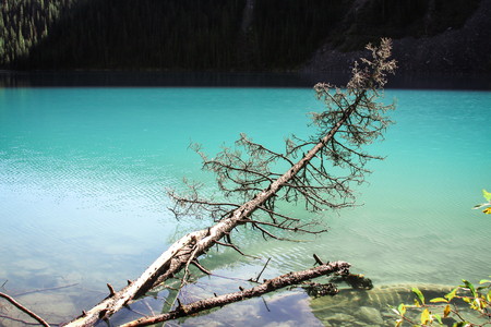 alling: Tree trunk alling into a turquoise lake Stock Photo