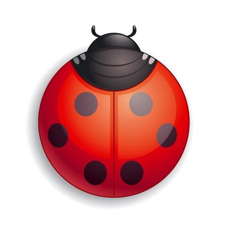 Round ladybug icon. Stock Vector - 10928126