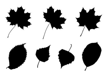 elm: Set of 7 silhouettes of leaves
