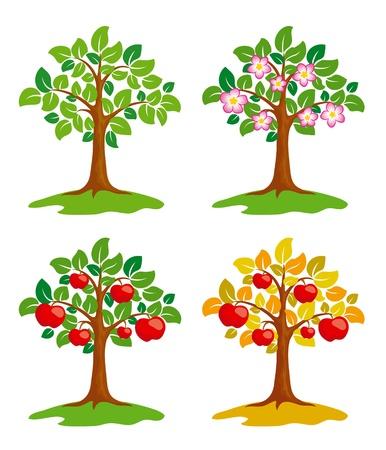 꽃이 만발한: 다른 계절에 사과 나무.