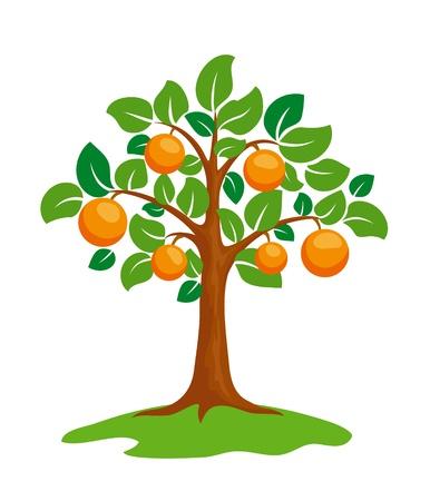 오렌지: 양식에 일치시키는 오렌지 나무. 일러스트