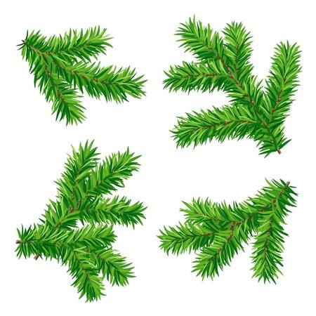 arbre     ? � feuillage persistant: Set de branches de sapin Illustration