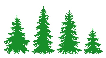 evergreen: Silhouettes of fir-trees