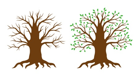 Tree with and without leaves Vector