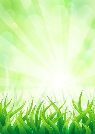 ochtend dauw: Natuurlijke achtergrond met weelderige groene gras.
