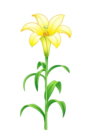 Yellow lily. EPS10 vector illustration Stock Vector - 18248336