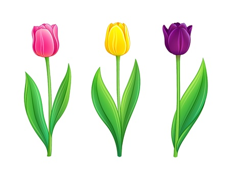 Set of tulips. Vector illustration in eps10 format Stock Vector - 18248339