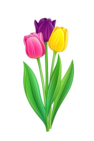Bouquet of tulips - EPS10 vector illustration Stock Vector - 18248340