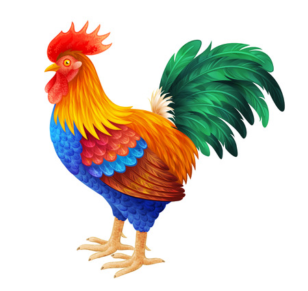 animal cock: Bright rooster vector illustration