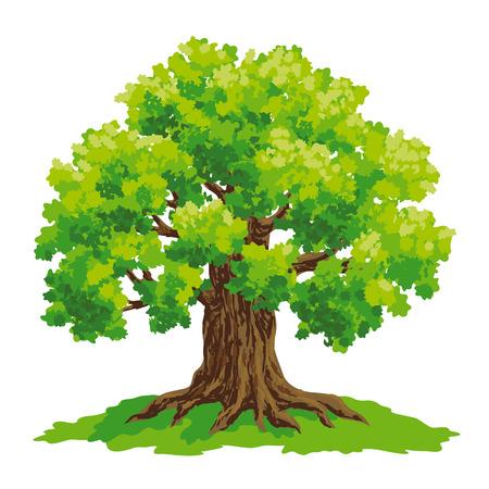 Vector drawing of oak. Stok Fotoğraf - 60909379