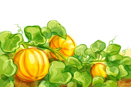 vegetable gardening: Vector illustration of pumpkins -