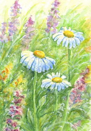 Three daisies among other wild flowers and grass in morning light with dew drops. Watercolor painting
