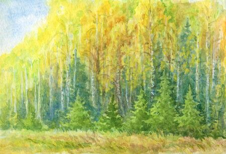 Autumn landscape watercolor drawing. Yellow birch forest with small fir trees in the forefront.