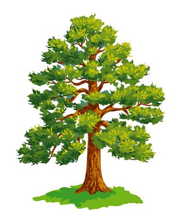 松の木の描画ベクトル。EPS8