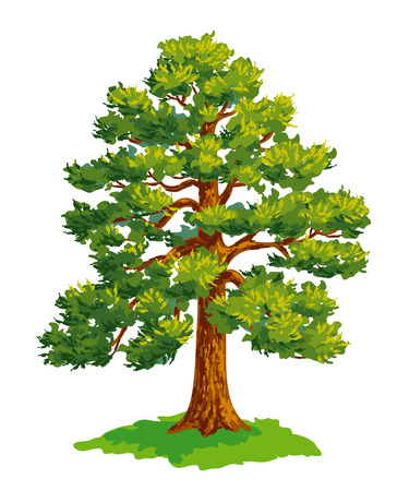 Vector drawing of pine tree. EPS8 Çizim