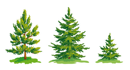 Vector drawing of little pine tree and two fir trees. EPS8