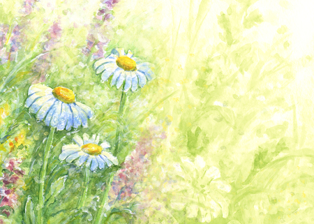 Watercolor background - three daisies among other wild flowers and grass in sunlight.