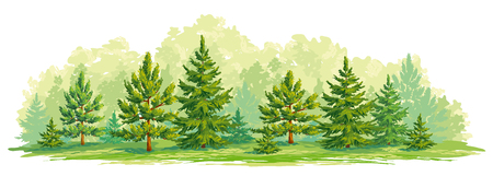 Border of a forest with young fir and pine trees. Vector graphic. EPS8