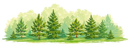 Rand van een bos met jonge sparren en pijnbomen. Vector afbeelding. EPS8 Stock Illustratie