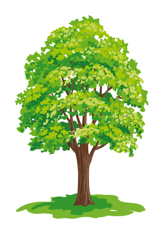 Vector drawing of maple tree. EPS8