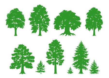 낙엽 및 침엽수 림 나무의 실루엣. 벡터 그리기