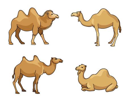Kamelen in cartoon stijl - vectorillustratie.