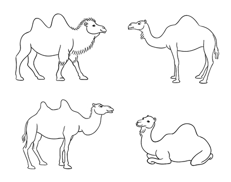 Camels in contours - vector illustration.