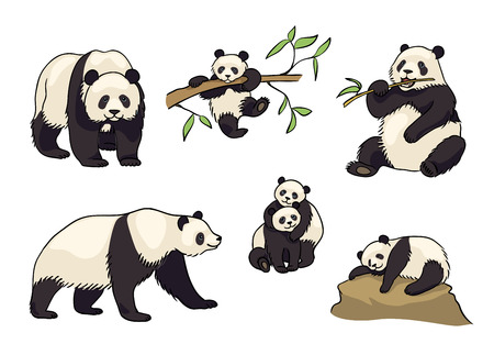 Pandas in cartoon style - adults and babies. Vector illustration.