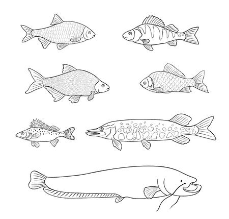 Different freshwater fish in outlines vector illustration.