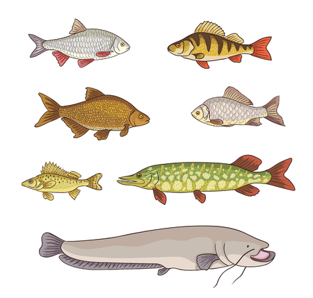 Freshwater fish, set of different fishes vector illustration. Çizim