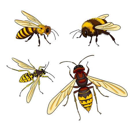 Vector insecten: bij, wesp, hommel, horzel. EPS8 Vector Illustratie