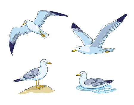 Seagulls - flying, sitting and swimming. Vector illustration. EPS8