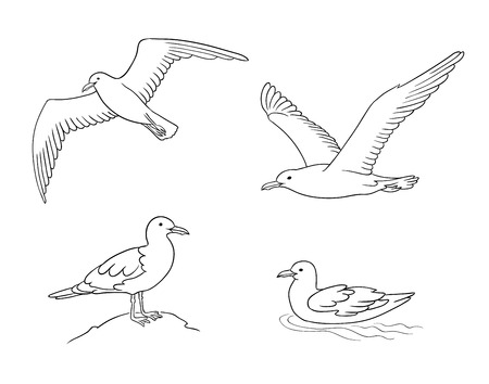 Seagulls in contours - flying, sitting and swimming. Vector illustration. EPS8