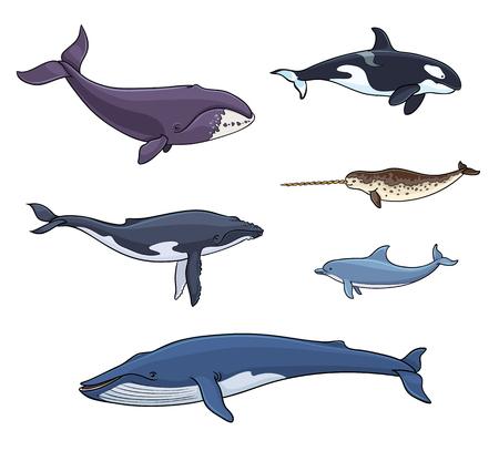 Ícones de mamíferos marinhos Ilustración de vector