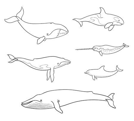 Sea mammals (cetacea) in outlines: different whales, dolphin, narwhal. Vector illustration. EPS8 Illustration