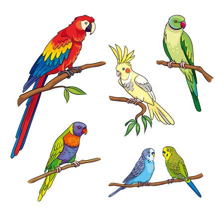 Set of different parrots vector illustration.
