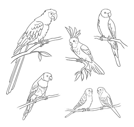 Set of different parrots in contours. Vector illustration. EPS8