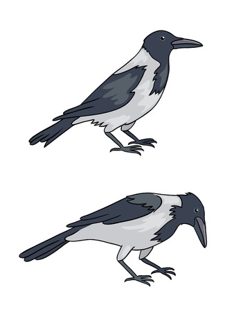 Two grey crows. Vector illustration. Vettoriali