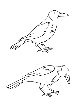 Two grey crows in contours. Vector illustration.