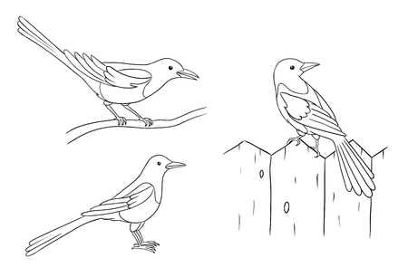 Magpies in different poses in contours. Vector illustration. EPS8. Çizim