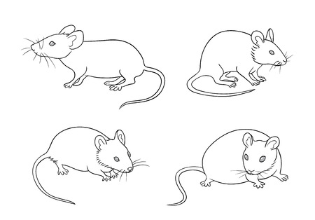 Mice in different posesin contours. Vector illustration. EPS8.