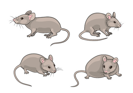 Grey mice in different poses. Vector illustration. EPS8.