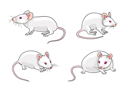 White mice in different poses. Vector illustration. EPS8. Çizim
